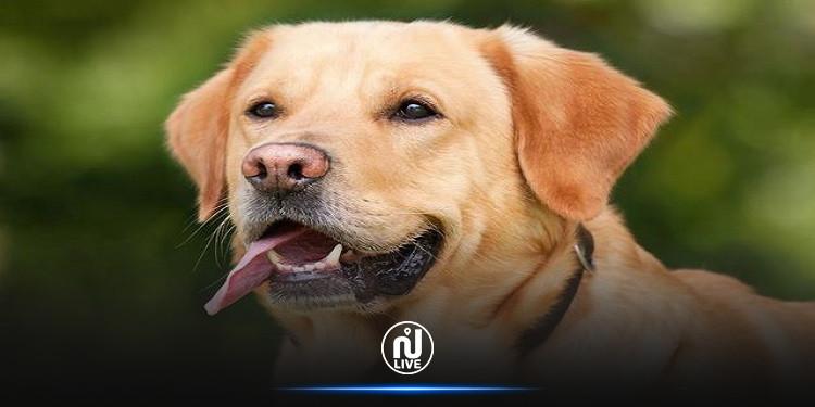 الكلاب قادرة على كشف كذب البشر!