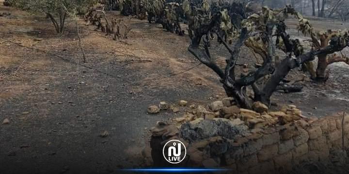 غار الدماء : النيران تلتهم 7 منازل و سيارة و تأتي أكثر من 40 هكتارا من الغابات