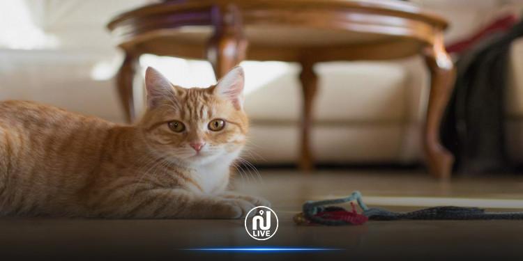 لص ظريف.. اقتحم منزلاً للسرقة فنظّف المكان وأطعم القطط !