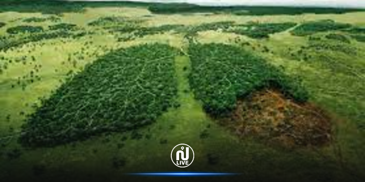 Environnement – WWF : Plus de 43 millions d'hectares de forêts ont été perdus en moins de 15 ans