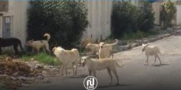 Ariana : La municipalité de Kalaat Landlos met fin à l'abattage des chiens errants