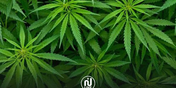 Maroc : Vers la légalisation du Cannabis thérapeutique ?