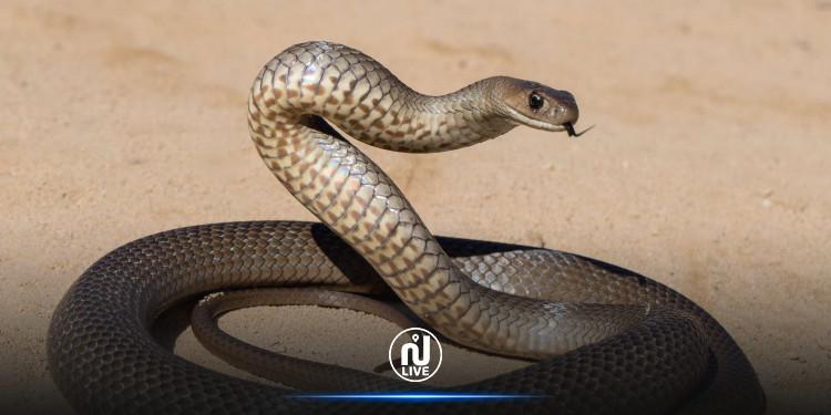 Siliana : Un élève découvre un serpent de deux mètres dans une école primaire