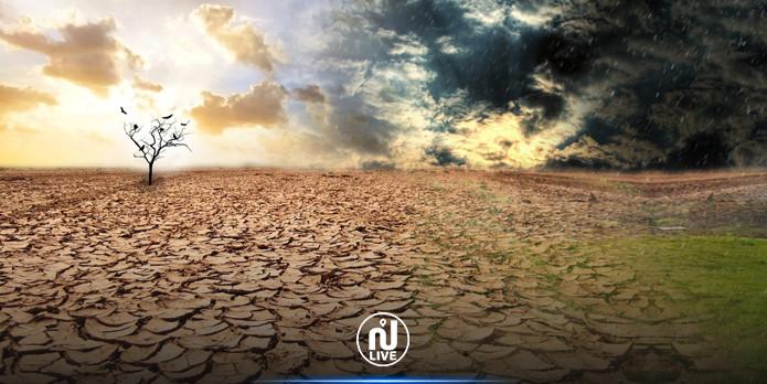 Tunisie : Plus de 50% des terres risquent de se désertifier