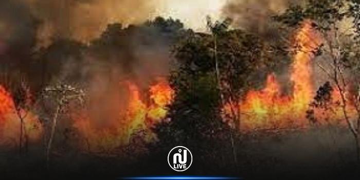 Siliana : 15 ha de forêt ravagés par un incendie
