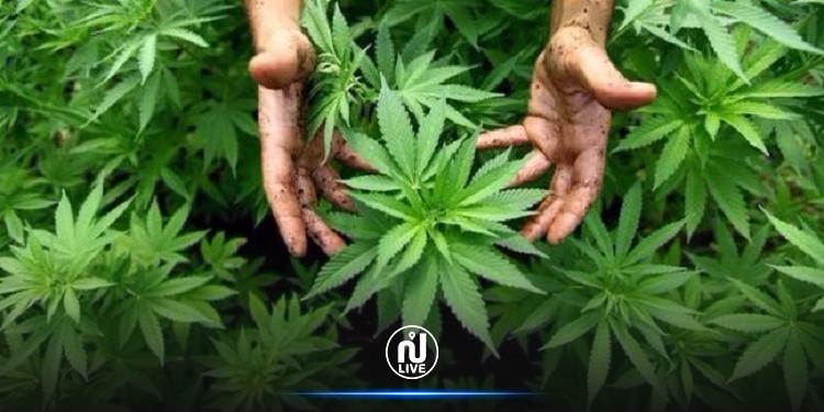 Dopage : Le cannabis pourrait quitter la liste des produits interdits