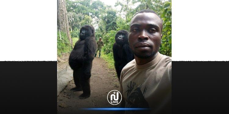 La célèbre gorille Ndasaki est décédée
