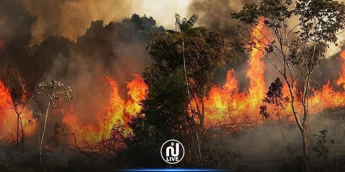بنزرت :النيران تلتهم حوالي 7هكتارات من النسيج الغابي بكاف غراب