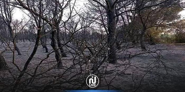 السرس:السيطرة على حريق التهم هكتارين من الغابة الشعراء