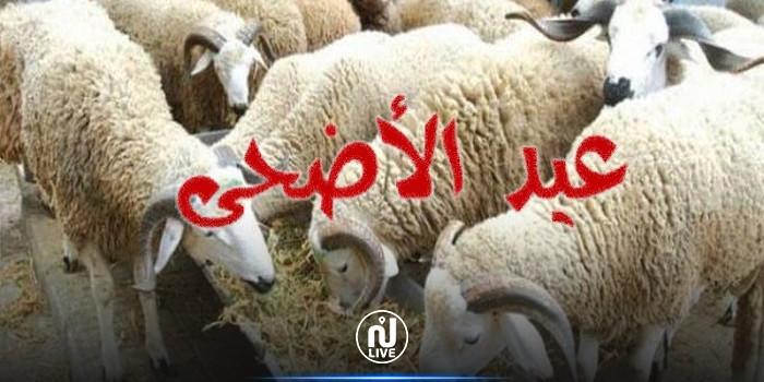 عضو اللجنة العلمية: طلبنا من الحكومة الحجر الصحي الشامل في عيد الأضحى