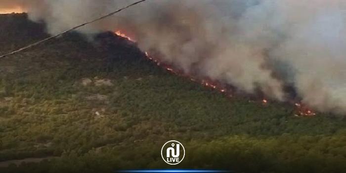 الحرائق تشتعل مجددا في الجزائر (فيديو)