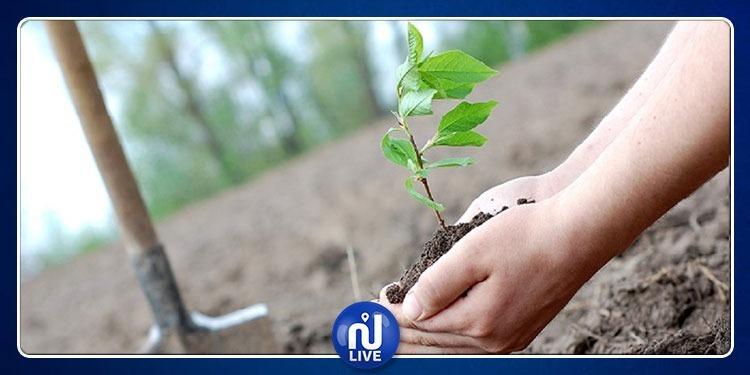 تطور الاستثمارات في نشاط غراسة الأشجار المثمرة