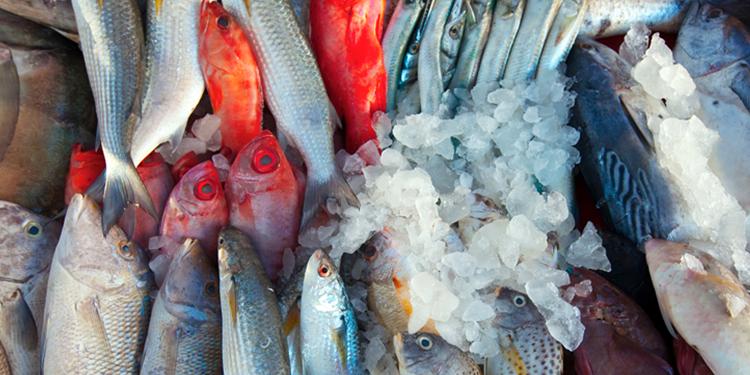 فقط بصفاقس: تقسيم أنواع الأسماك حسب الفصول