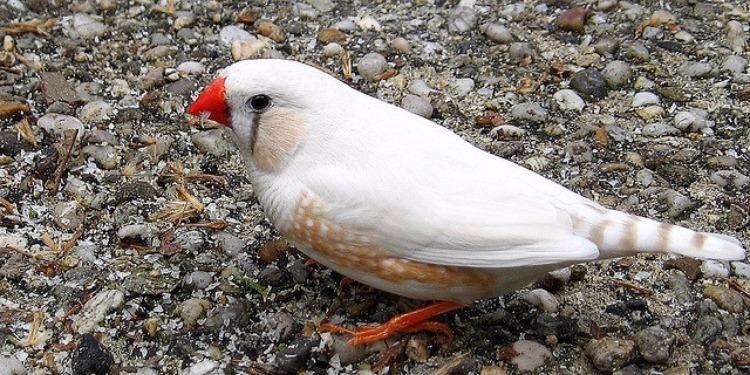 قابس: إحباط تهريب طيور من نوع ''البنغالي'' بقيمة 90 ألف دينار