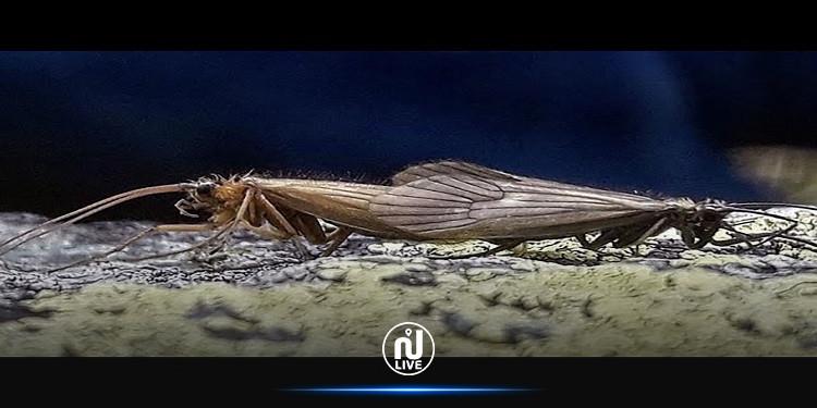 اكتشاف ''ذبابة كورونا'' في الجبال الملعونة (فيديو)