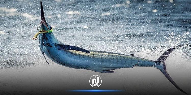 يصطاد سمكة نادرة قيمتها 2.6 مليون دولار.. ويأكلها مع أصدقائه (صور)