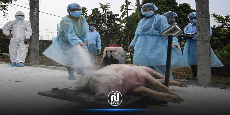 بعد كورونا.. الصين تعلن تفشّي حمّى الخنازير الإفريقية