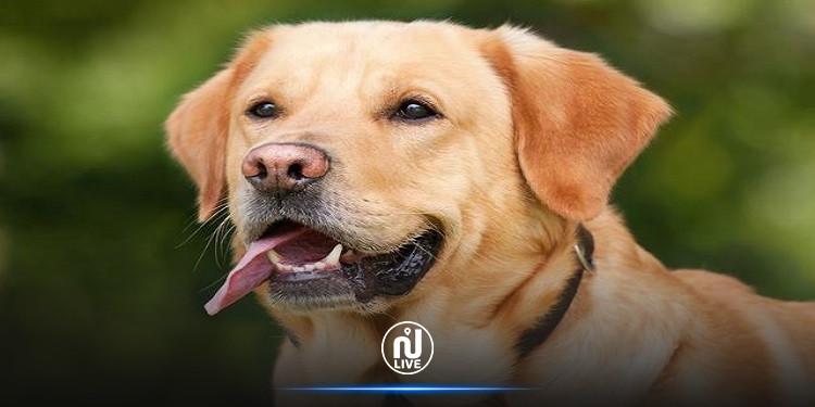 دراسة يابانية: الكلاب يمكنهم أن يكشفوا الأشخاص الكاذبين
