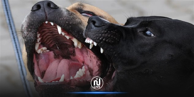 كلاب سائبة تهاجم طفلا وترديه قتيلا
