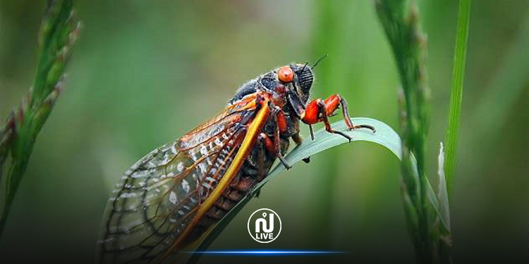 مليارات الحشرات المزعجة تستعدّ إلى الخروج !
