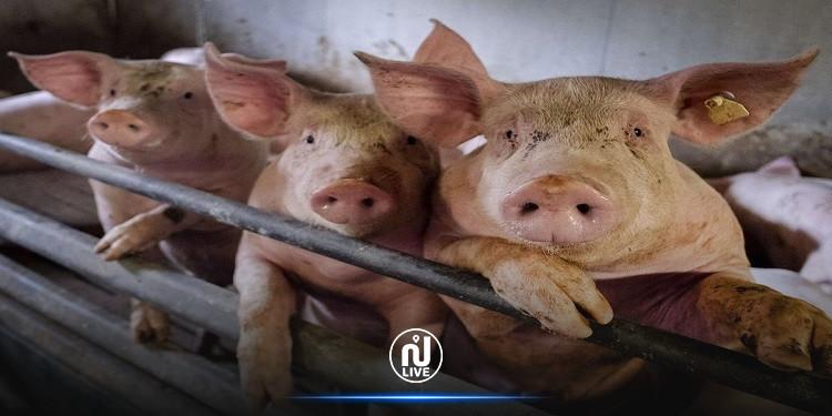 الرئيس الفلبيني للمواطنين الذين يرفضون التطعيم: 'سأعطيكم لقاح الخنازير'