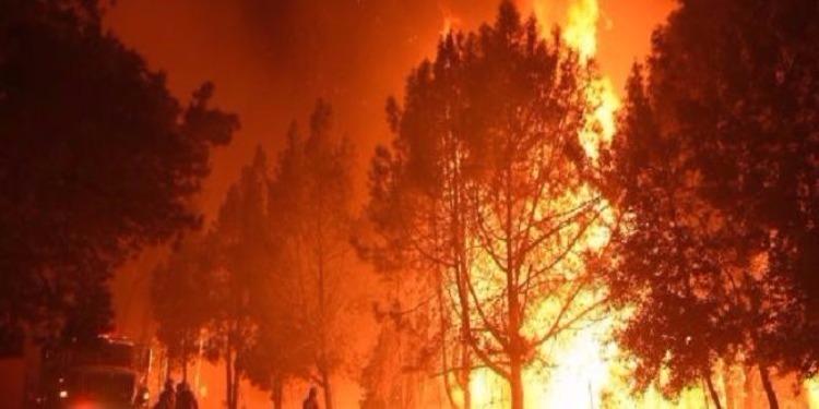 'القبض على متورط في إشعال الحرائق': والي جندوبة يوضح