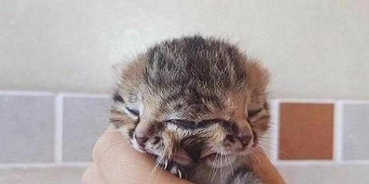 قطة بـ'وجهين' تثير حيرة الأطباء! (صور+فيديو)