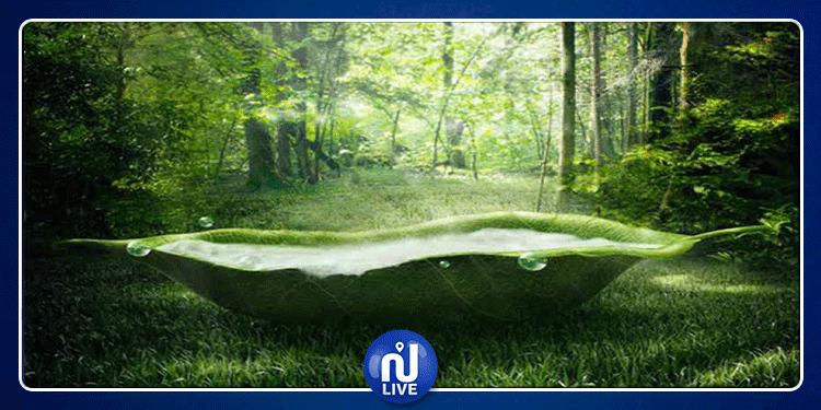 اليابانيون ينصحون بـ ''استحمام الغابات'' لإطالة العمر!