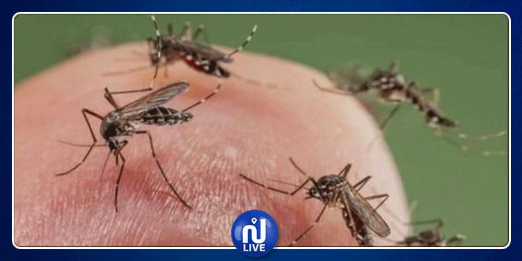 المنستير: تحديد 115 بؤرة تكاثر الحشرات خلال سنة 2019