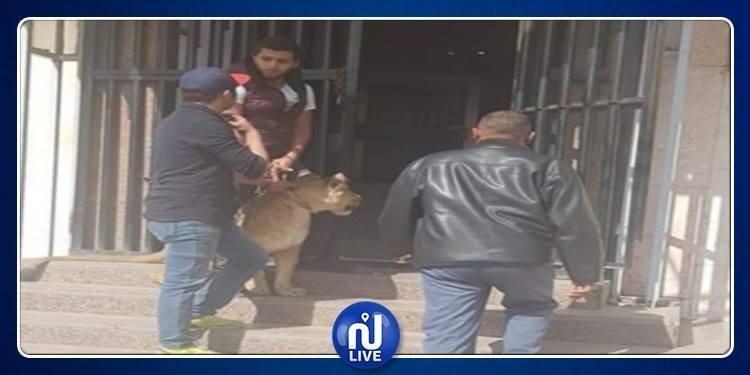 أسد يهاجم صحفية مصرية داخل مبنى الاذاعة والتلفزيون (صور)