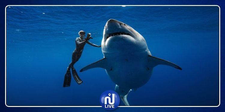 Hawaï: Des plongeurs nagent avec un gigantesque requin...