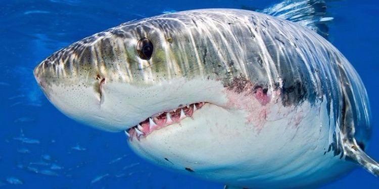 سيدة تصطاد سمكة قرش يبلغ طولها 3 أمتار (صور)