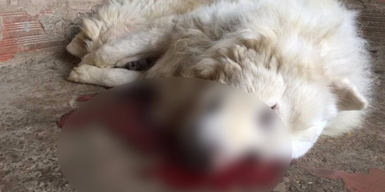القضاء على كلاب في سوسة : صاحب الكلاب يؤكد أنه ليس بائع خمر