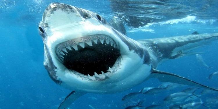 Faits insolites : Un homme attaqué par un requin, un ours et un serpent