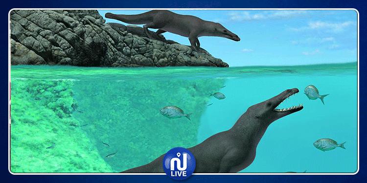 اكتشاف حفريّات لحوت برمائي بـأربعة أرجل عاش قبل 43 مليون سنة