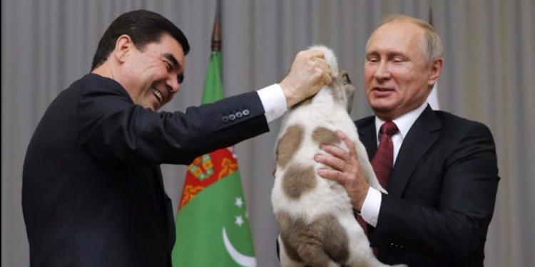 رئيس تركمانستان يهدي كلبا لبوتين بمناسبة عيد ميلاده (فيديو + صور )