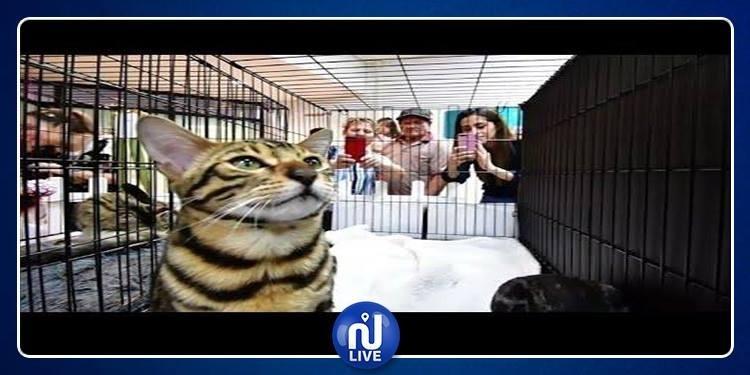 Vidéo. Exposition internationale de chats