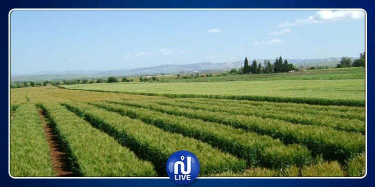 تخصيص 202 هكتار من الأراضي الدولية لتوزيعها على العاطلين عن العمل