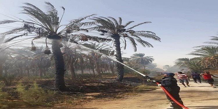 Kébili: Un grand nombre de palmiers-dattiers détruits par deux incendies