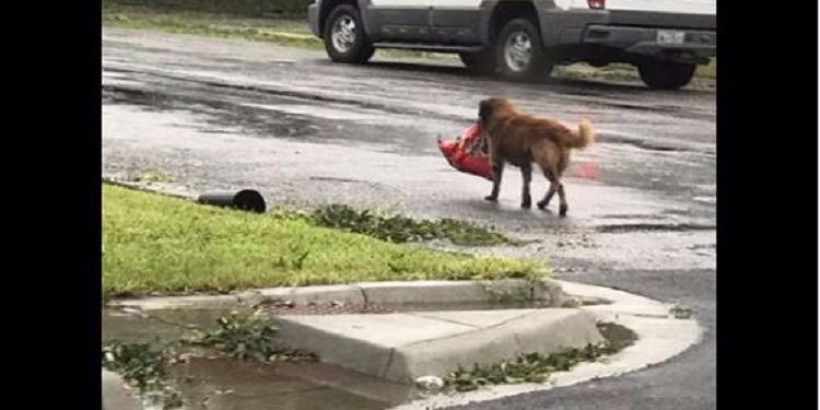 حمل كيساً يحوي أطعمته.. كلب ينقذ نفسه من إعصار  'هارفي' (فيديو)