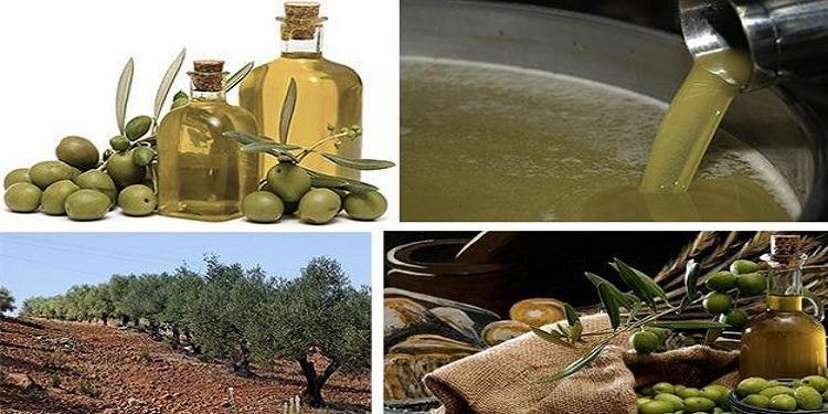 Exportations d'huile d'olive: Le décollage