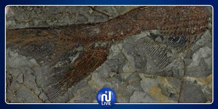 سقوط نيزك قبل 66 مليون عاما...هذا ما اكتشفه العلماء