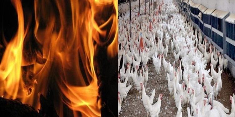 القيروان: إندلاع حريق هائل فى مدجنة