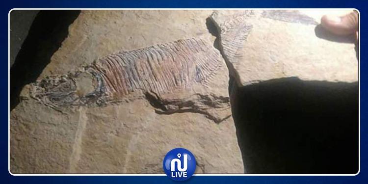 نفطة: مواطن يعثر على بقايا أحفورية ويسلمها للإدارة الجهوية للتراث