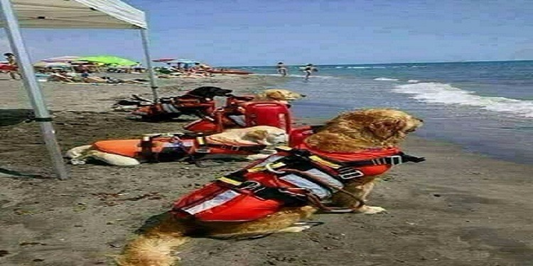 كلاب حراسة الشواطئ في ألمانيا ينقذون 160 طفل منذ دخول الصيف