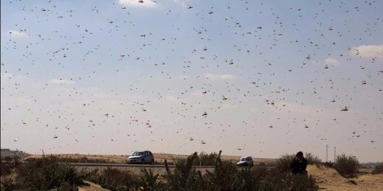 دراسة : تراجع الحشرات ينذر بكارثة بيئية مرتقبة