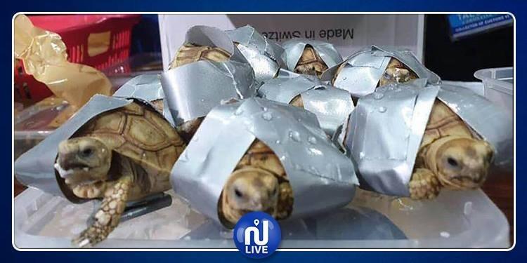 Aéroport-Philippines: 1 500 tortues retrouvées dans des bagages