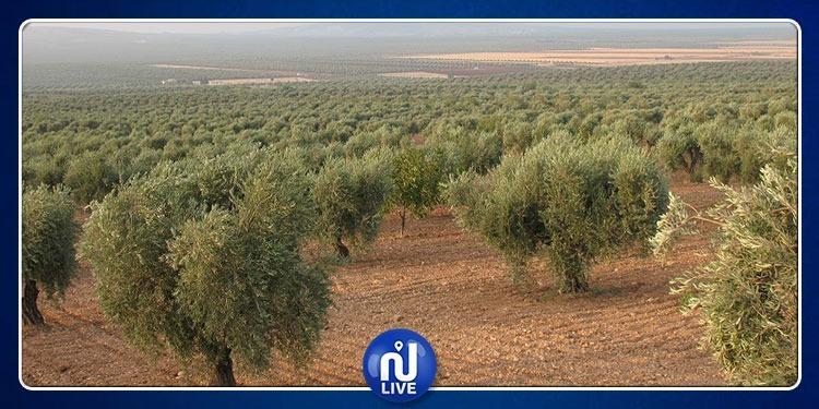 La Tunisie 1ère, pour les superficies d'oliveraies biologiques