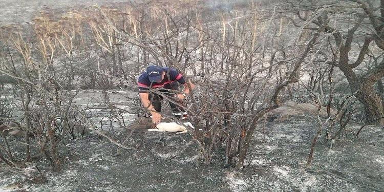 سجنان :أعوان الحماية ينقذون كلب استنشق الغازات خلال الحرائق (صور)