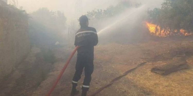 Incendie de forêt près de la cité des journalistes, à El Ghazala
